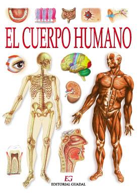 El cuerpo humano y sus diferentes sistemas rganos principales y