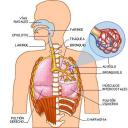 sisemas-del-cuerpo-humano.jpg