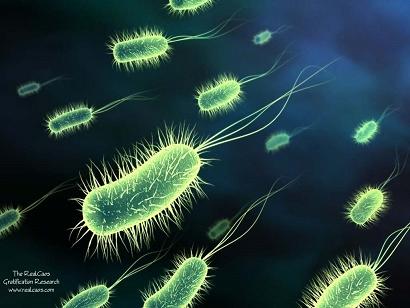 unicelulares