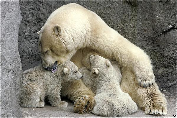 Ciencias Naturales Online » Ciencias Naturales Los Mamiferos