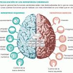 Anatomía del sistema nervioso humano 1