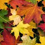Cambios de pigmento de las hojas