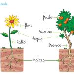Características de las plantas -1