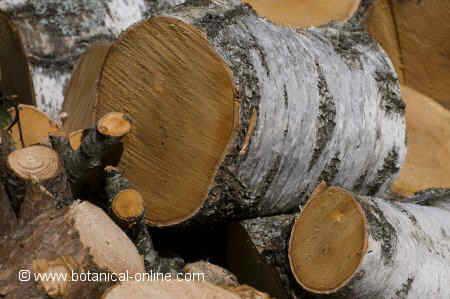 maderadehaya