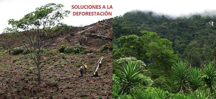 soluciones-a-la-deforestacion